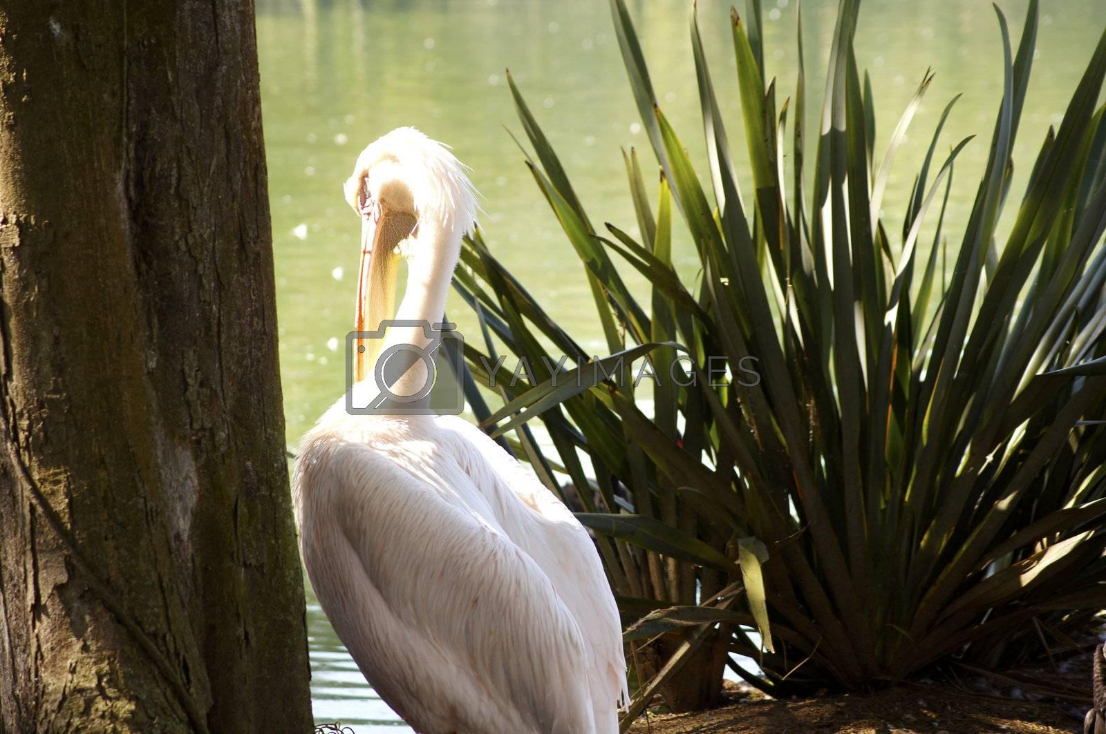 Habitat aquatic environments such as mangroves and muddy beaches, and undertakes seasonal migrations