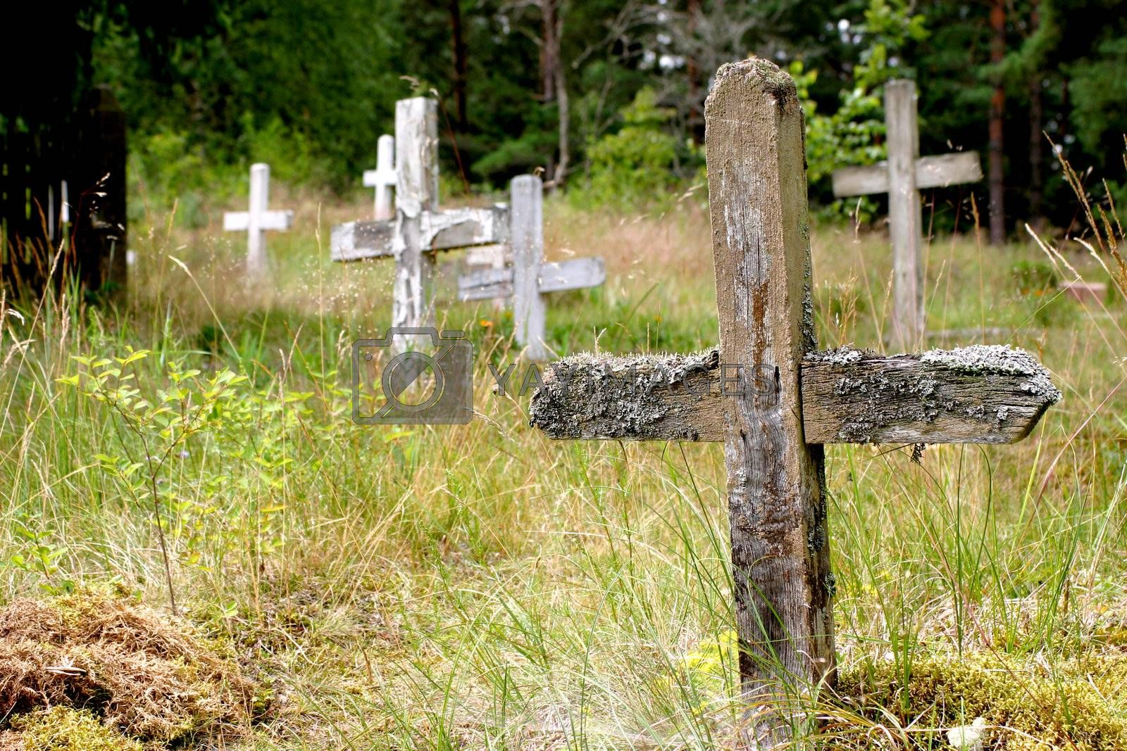 Abandoned cemetery and wooden crosses in Pape, Latvia