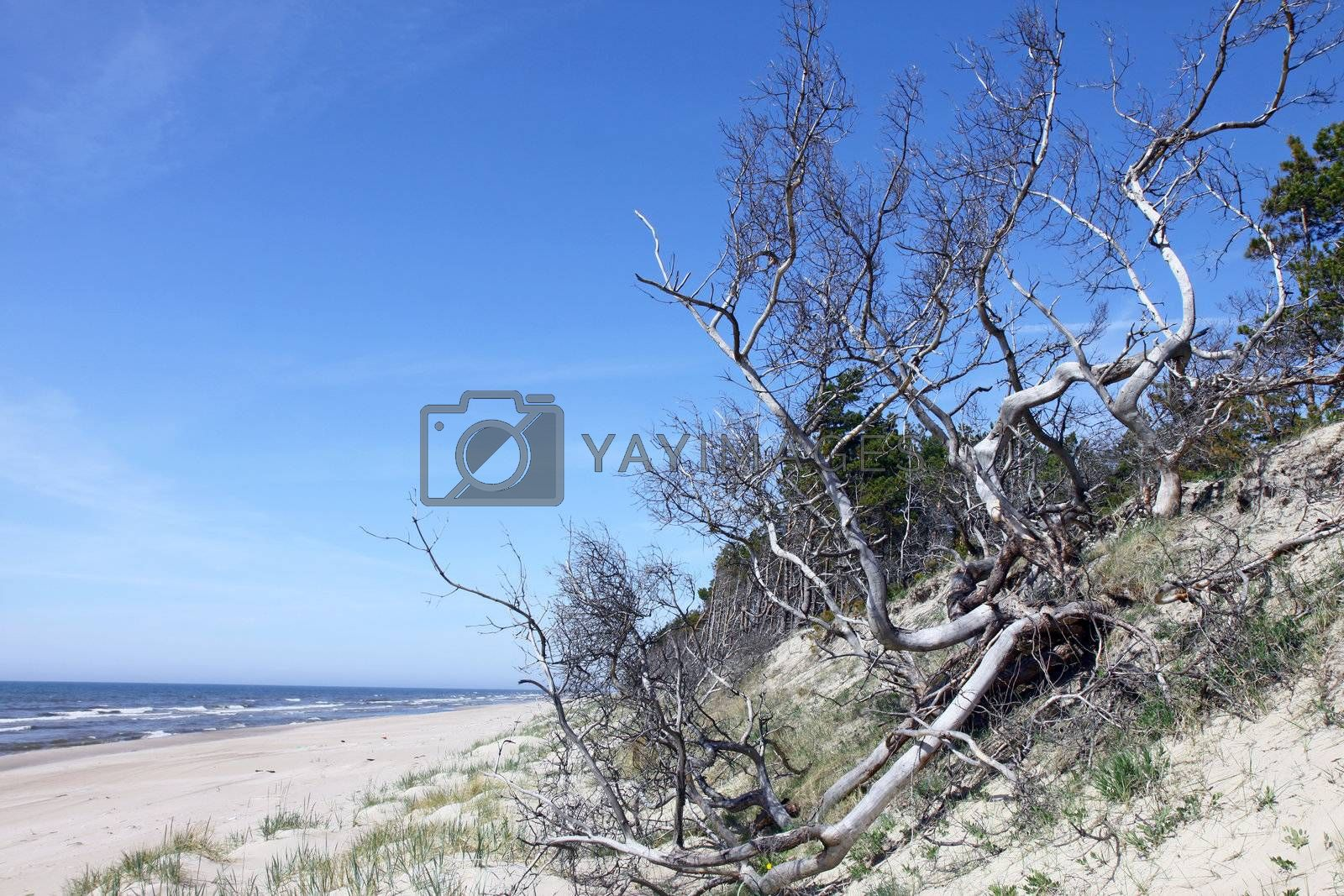 Landscape photograph with dead tree on the sandy beach