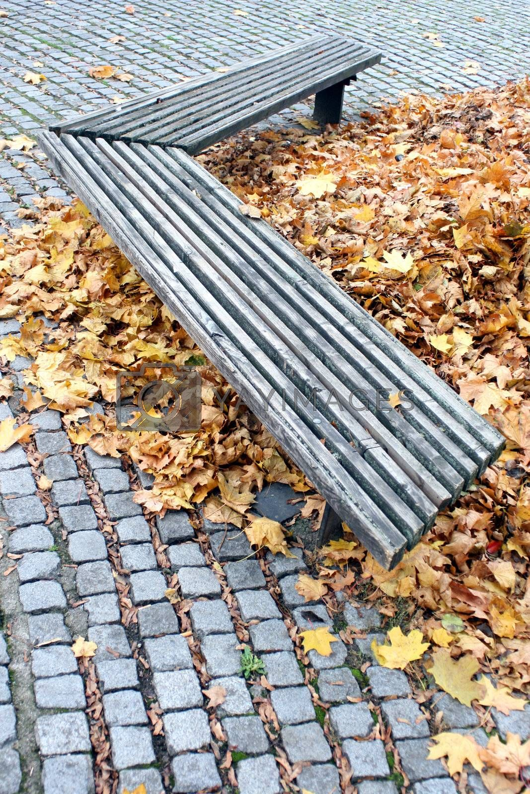 Old empty wooden bench at the park with golden leaves