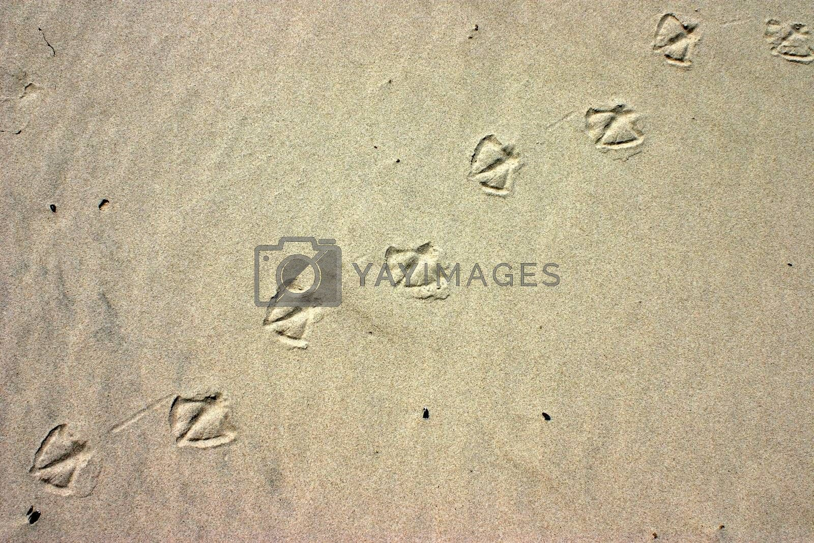 Deliberately high contrast on the sand with bird paw prints, natural background