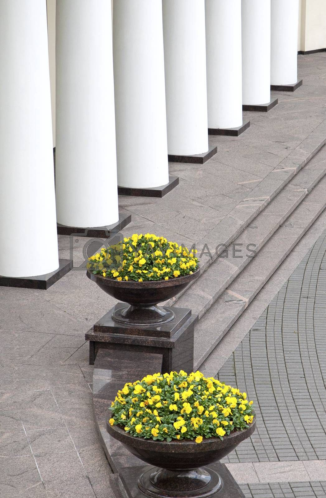 Clasical style collonade and flower pots with yellow buds