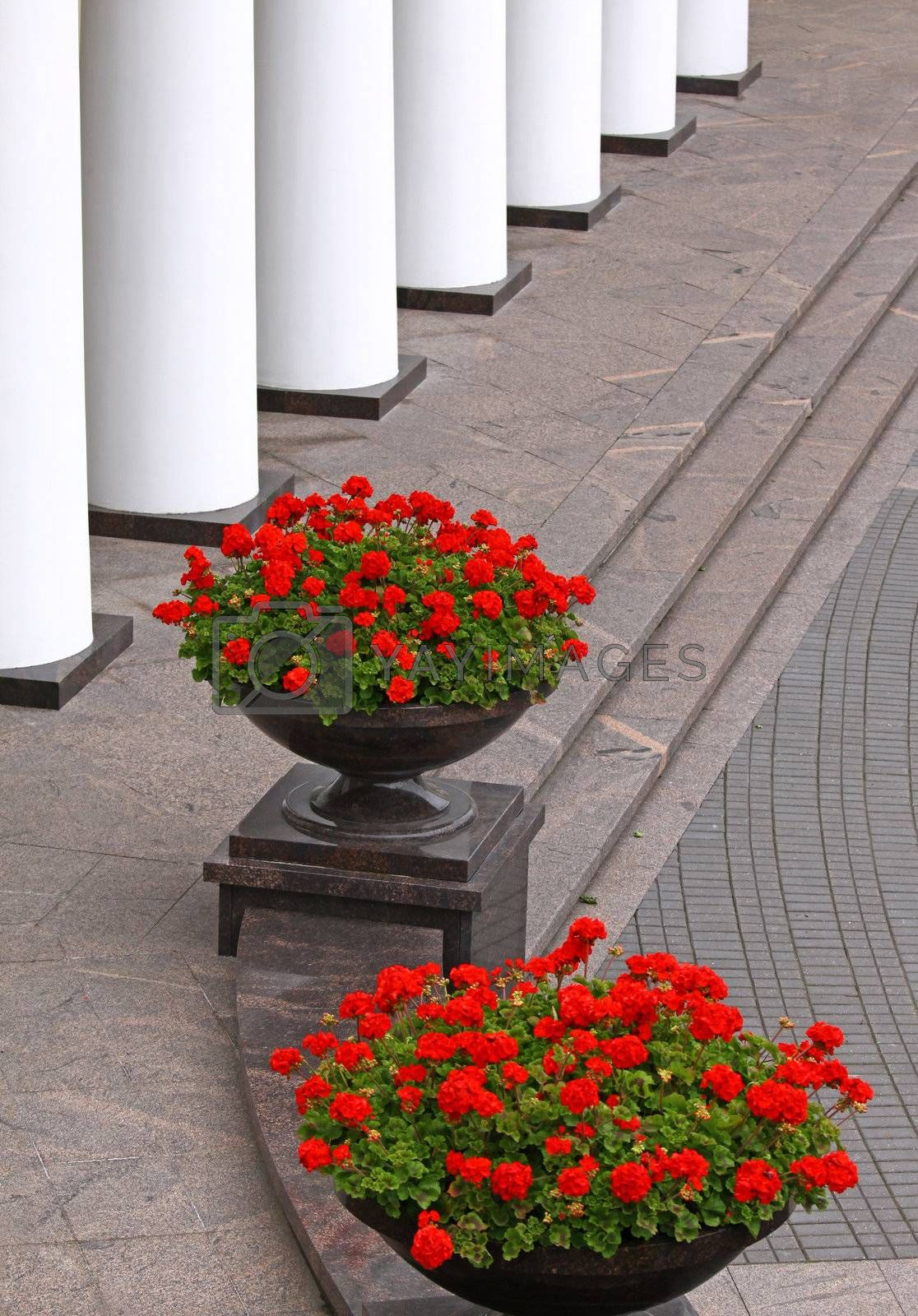 Two big flower pots with red flowers and white colonnade seen as nice exterior details