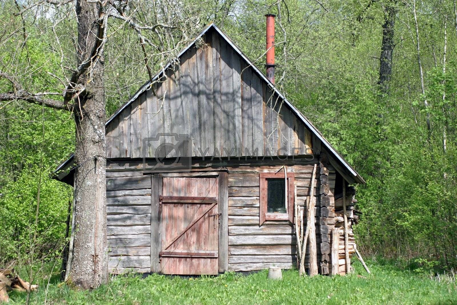 Shabby and abbandoned wooden hut in the forest at sunny summer day