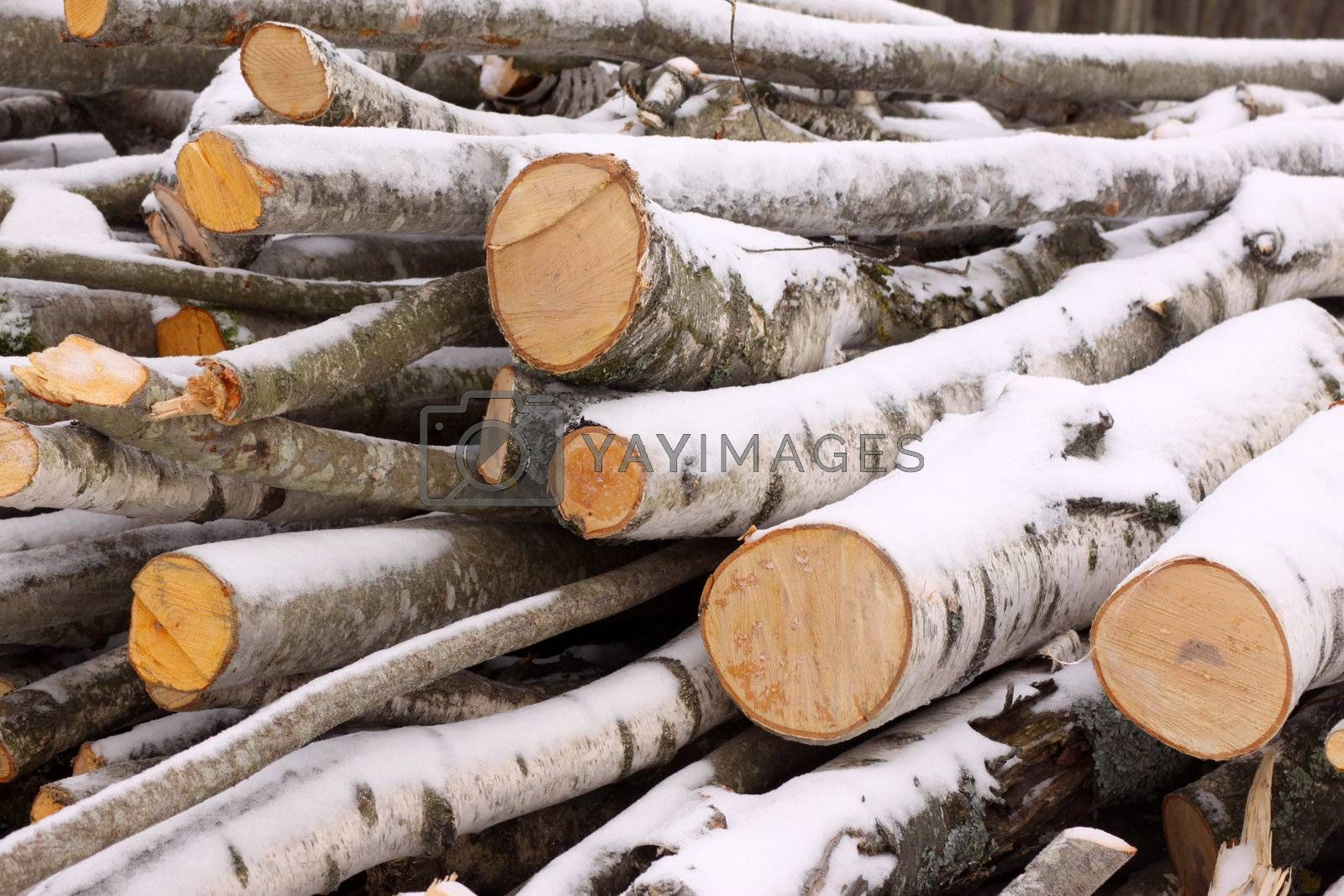 Pile of freshly cut timber covered with snow