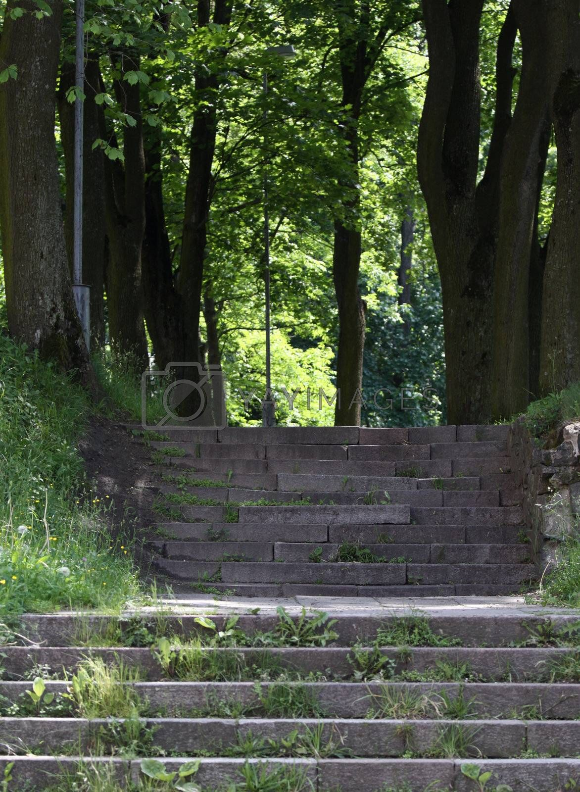 Vertical picture of stone stairs in the park
