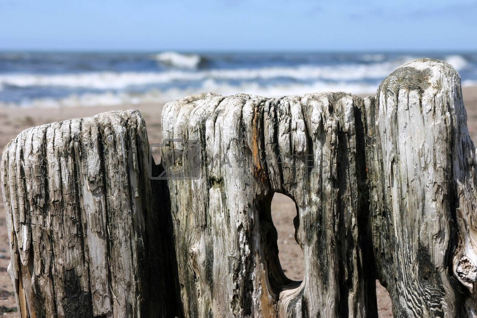 Rotten piles on the seashore, empty Baltic sea beach, natural beauty