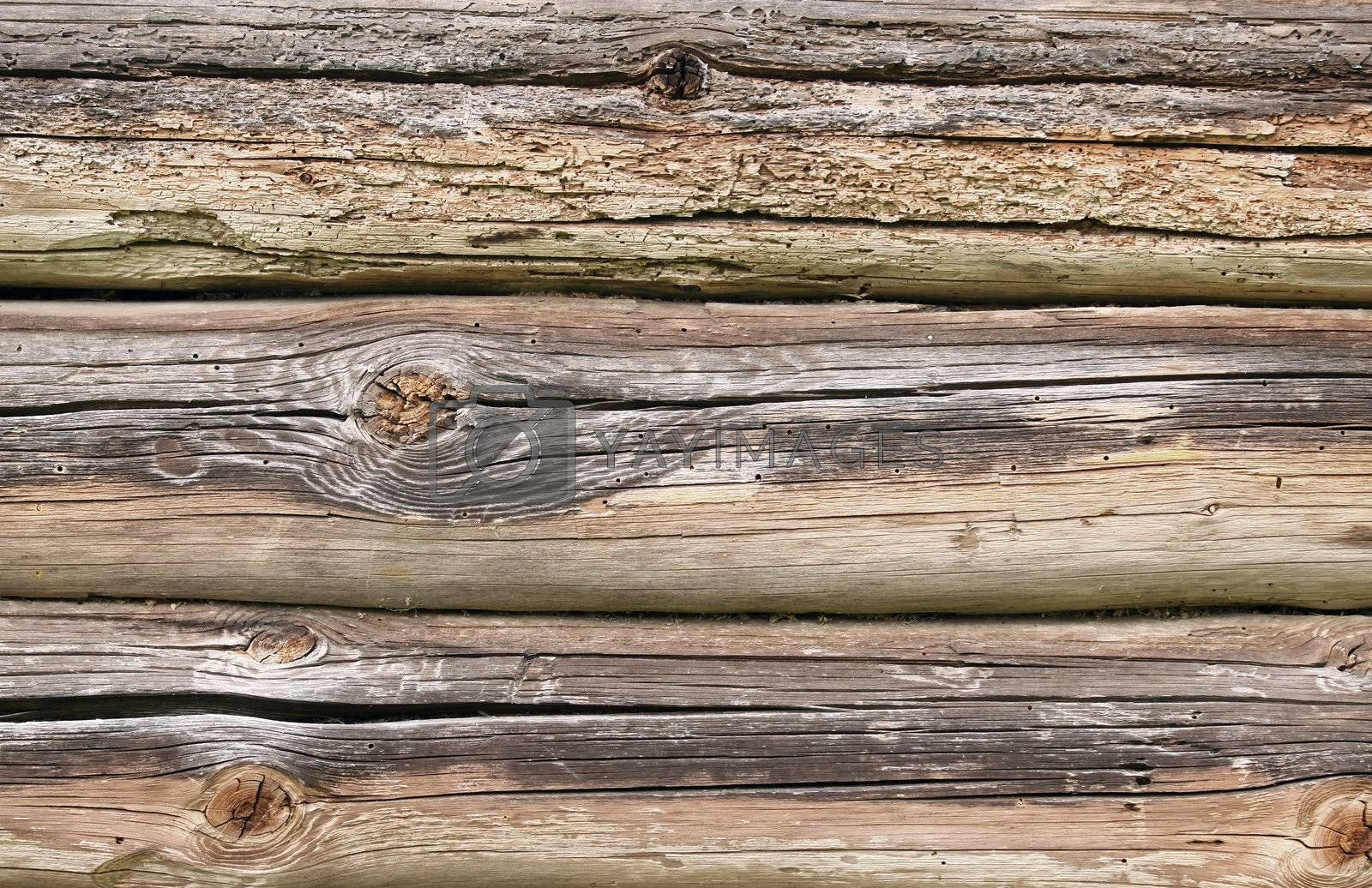 Old natural rotten wood, perfect background texture