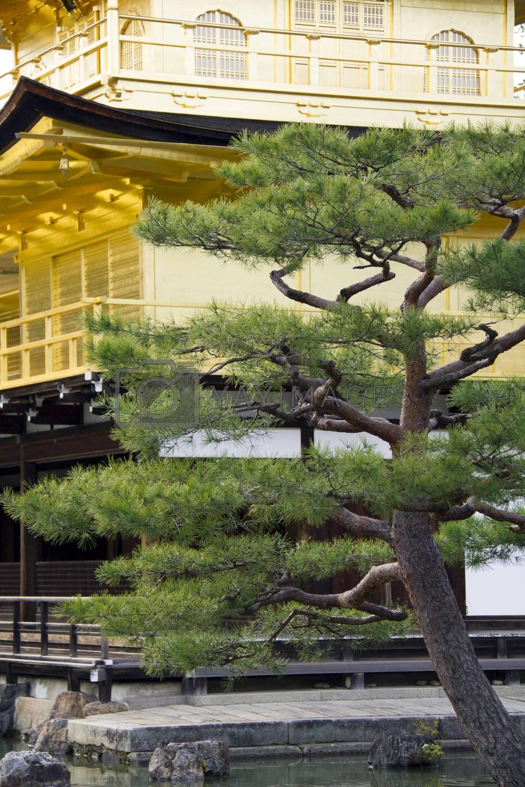 Detail of the peaceful Golden Pavilion or Kinkakuji temple garden in Kyoto, Japan