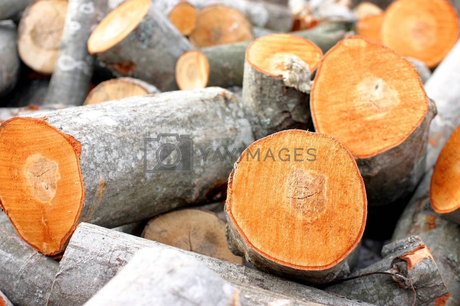 Pile of newly cut timber, rural scene