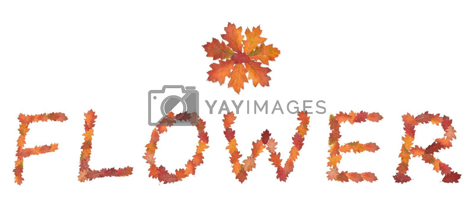 word flower made of autumn leaves for flower shops