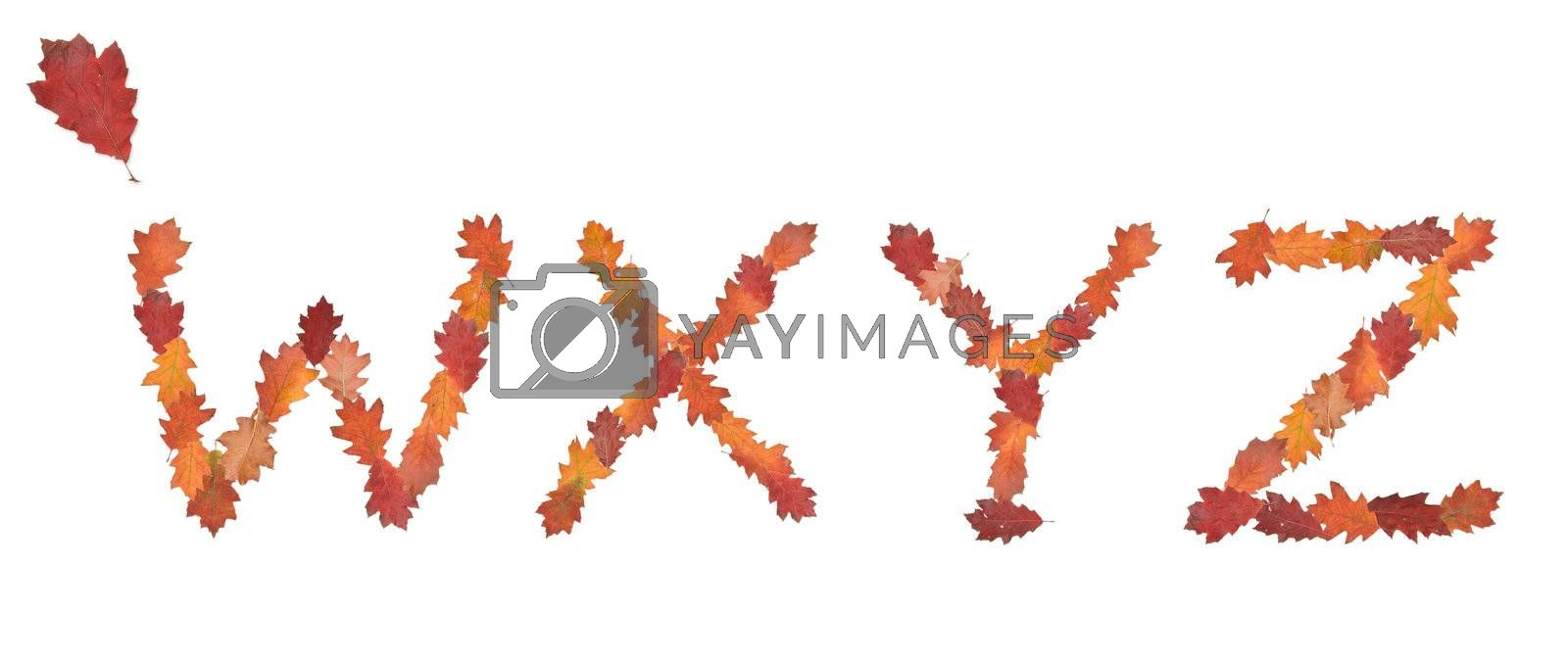 alphabet made of autumn leaves for education