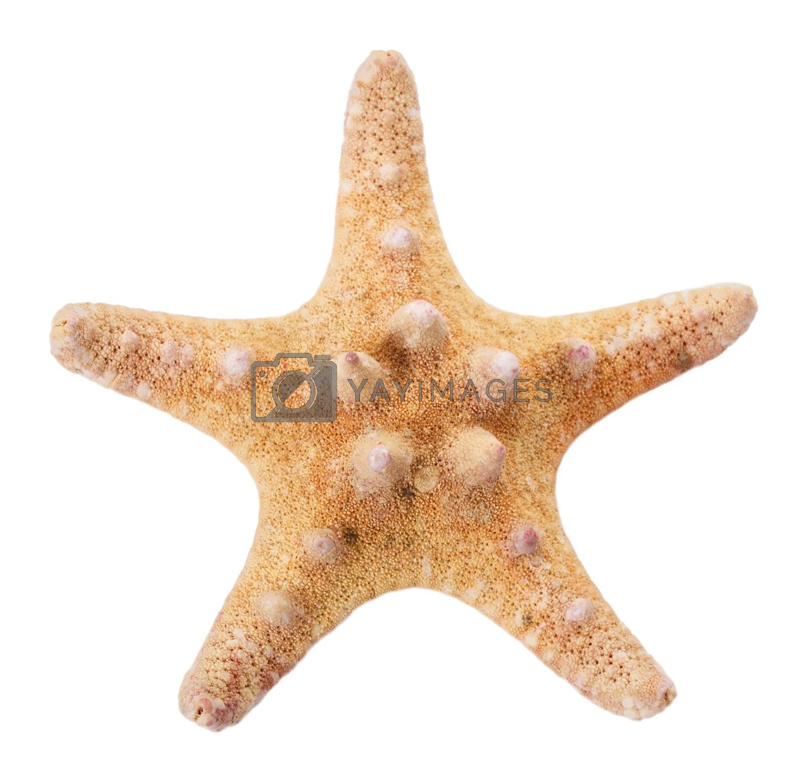close-up starfish, isolated on white