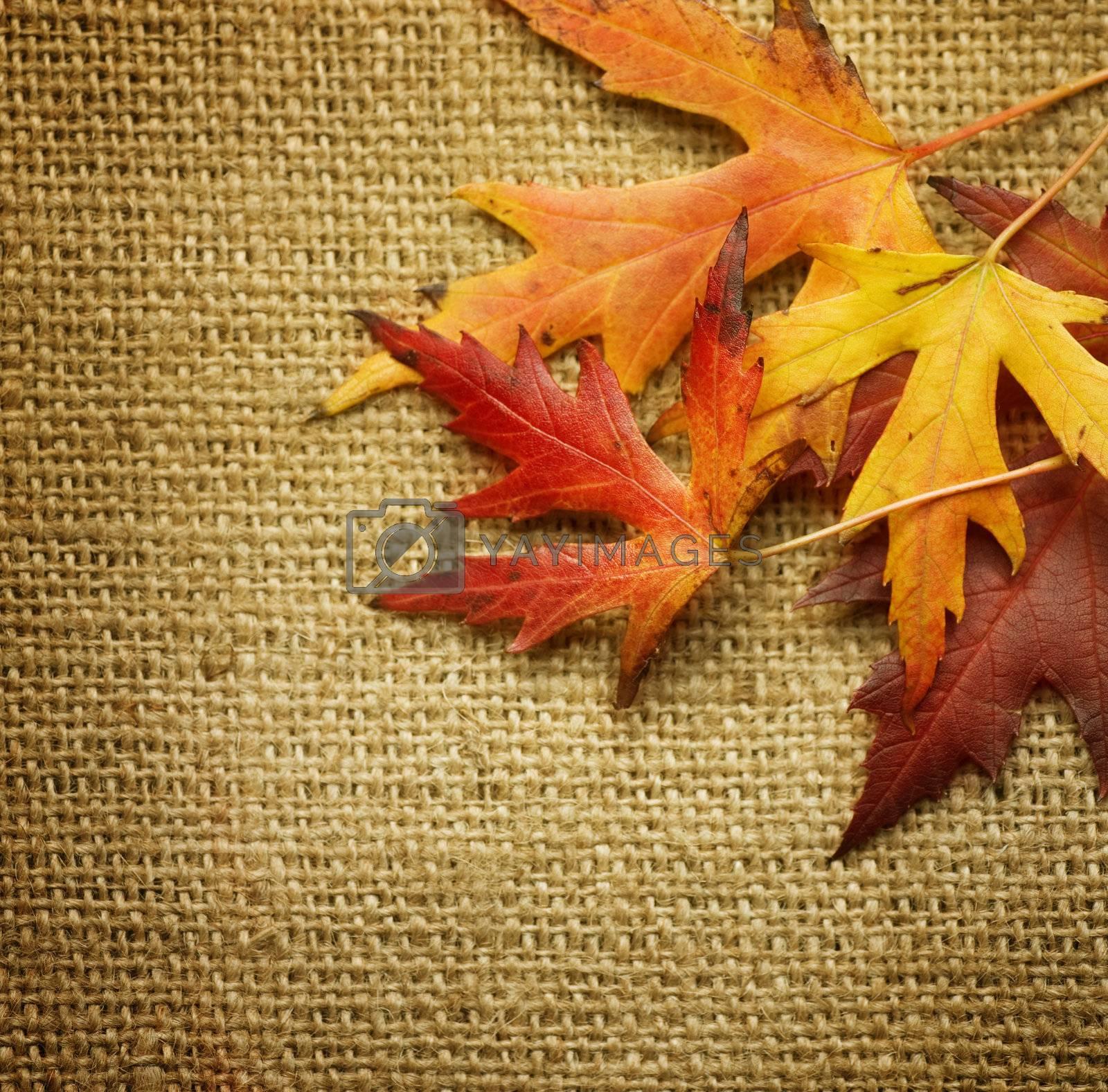Autumn Leaves over Burlap background