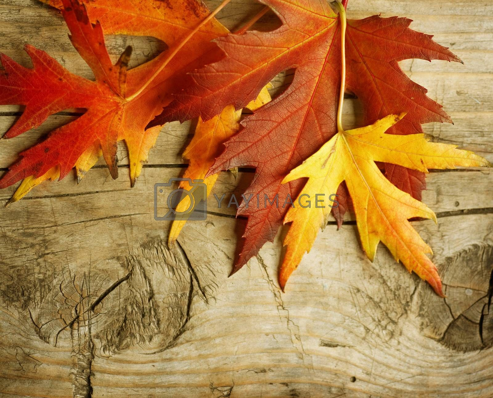 Autumn Leaves over wood background. With copy space