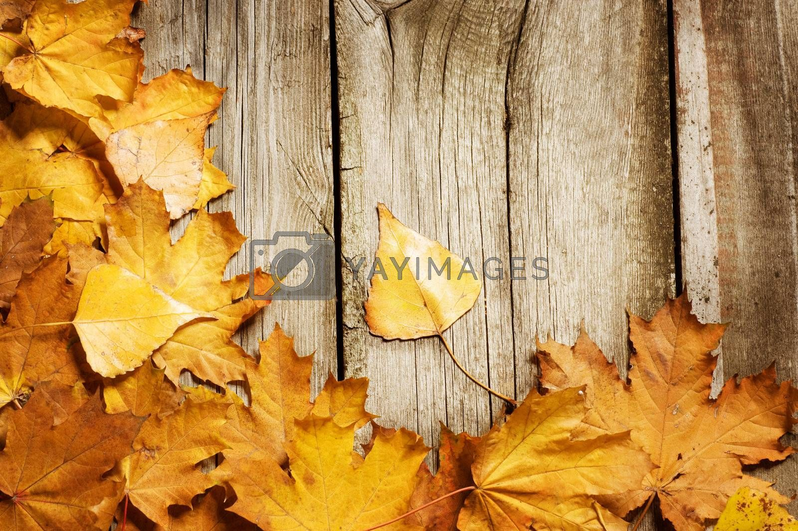 Autumn Leaves over wooden background. With copy space by Subbotina Anna