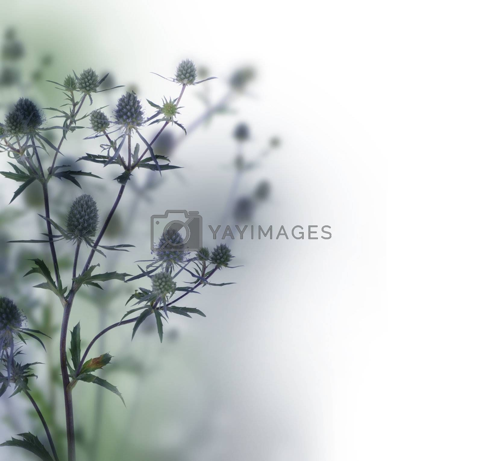 Floral Border  by Subbotina Anna