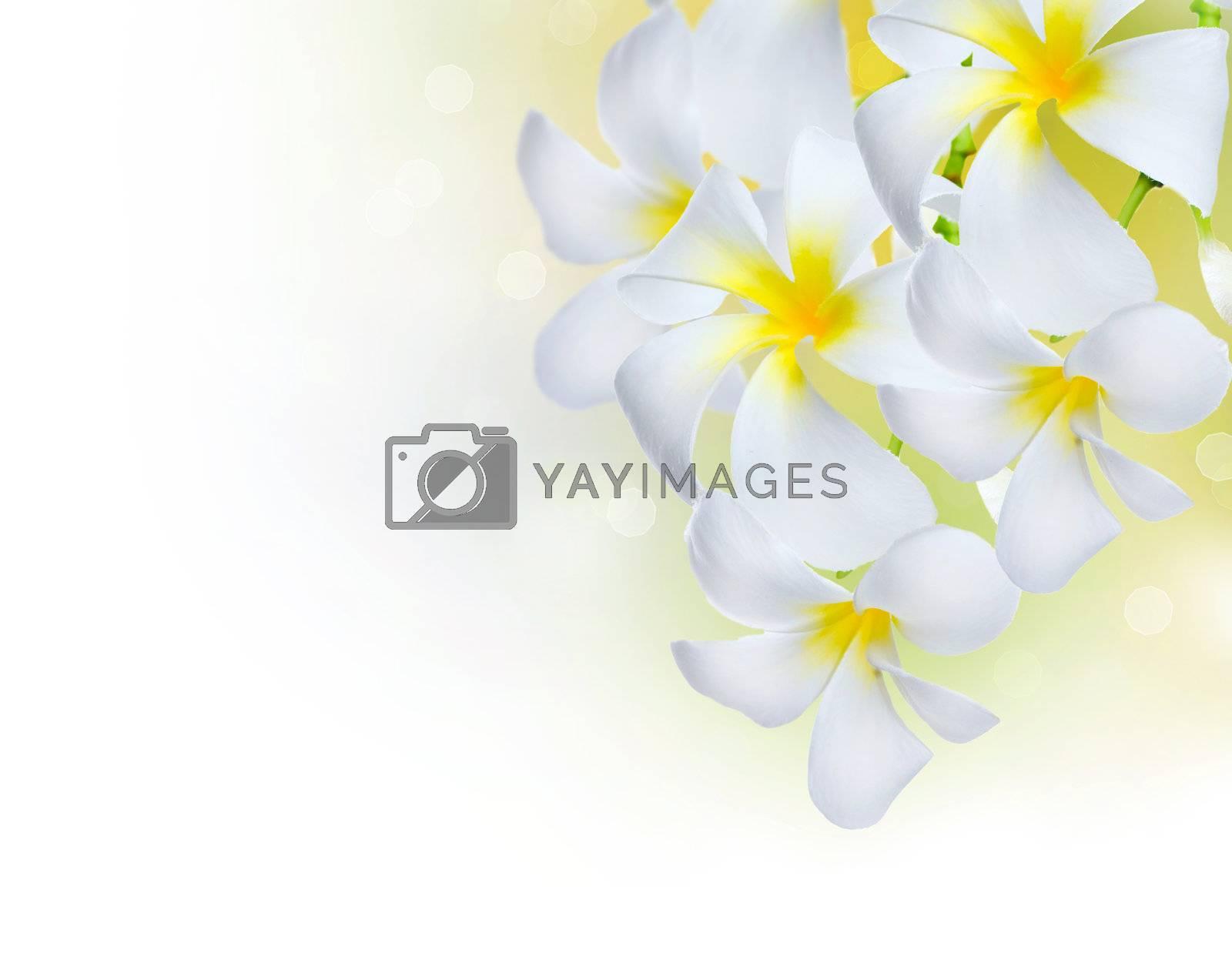 Frangipani Spa Flowers border.Plumeria by Subbotina Anna