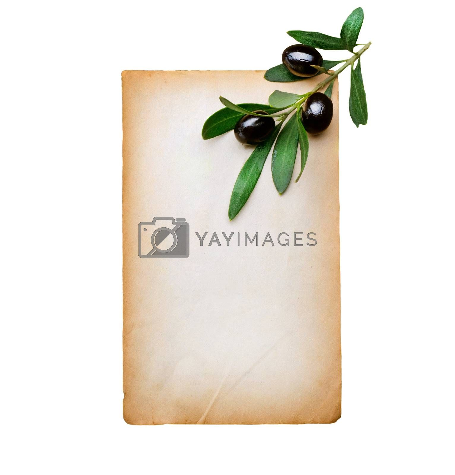 Blank Paper and Olive Branch isolated on white by Subbotina Anna