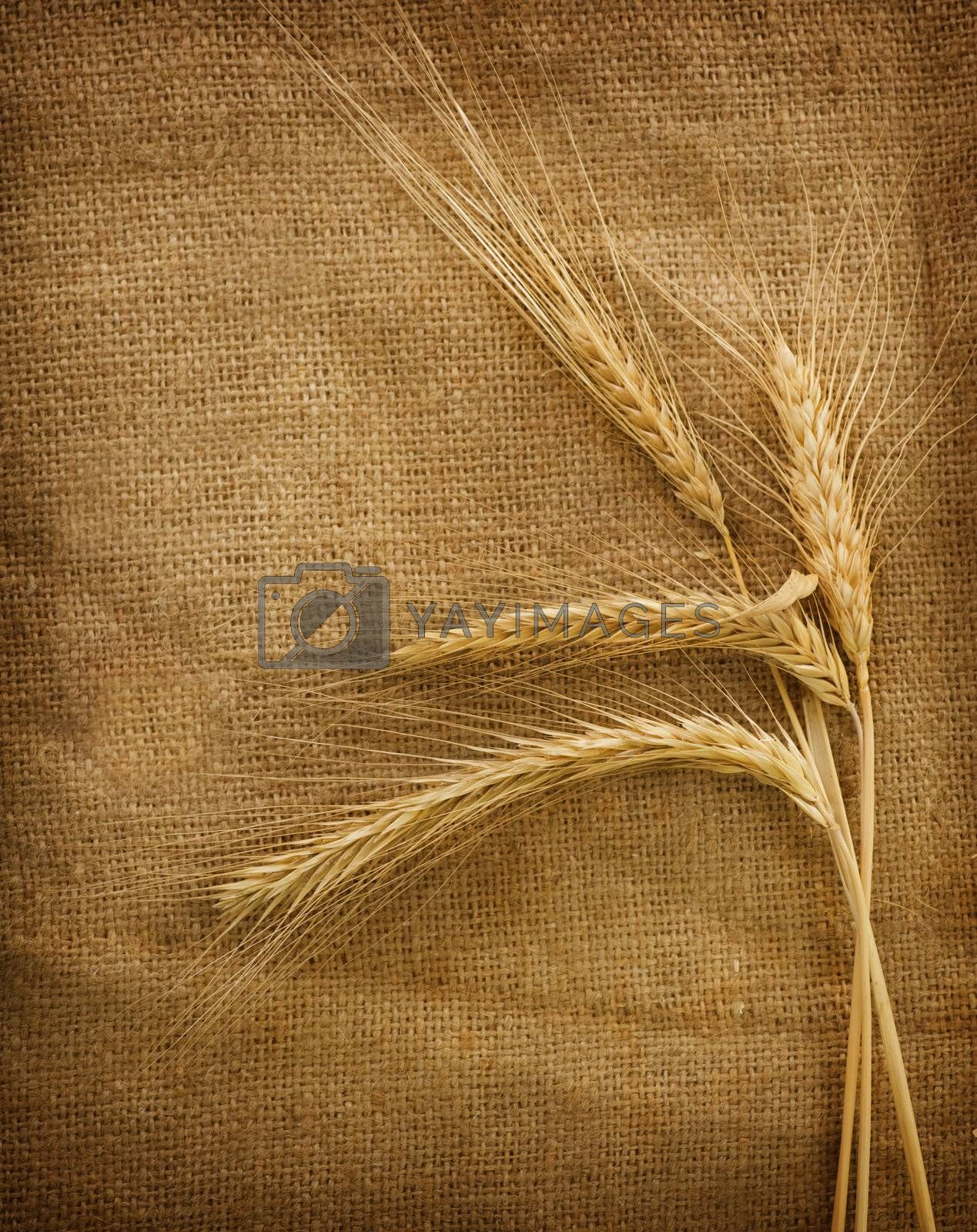 Wheat Ears Over Burlap Background  by Subbotina Anna