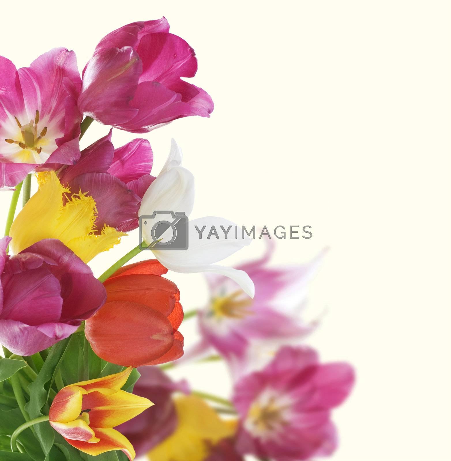 Flowers Border. Anniversary Card Design by Subbotina Anna