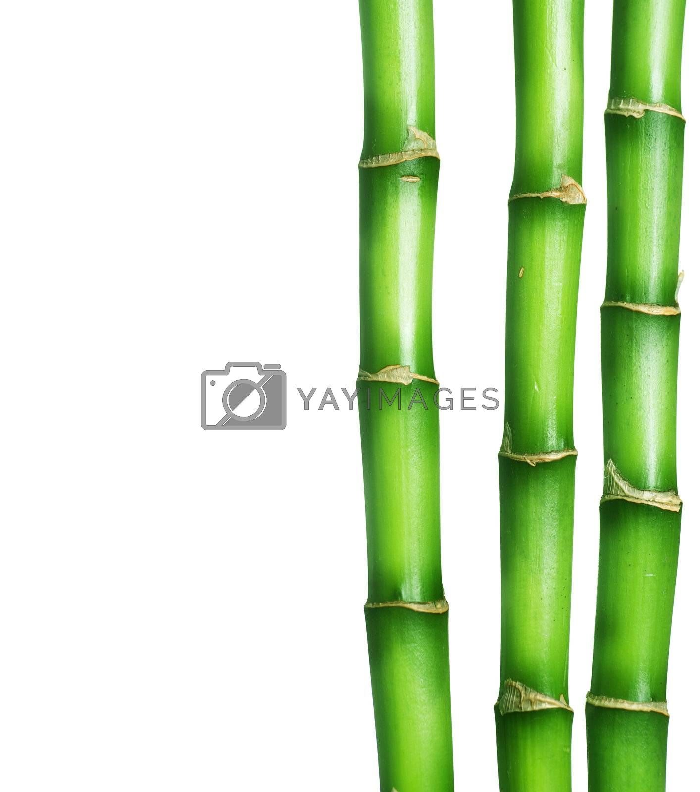 Bamboo Border by Subbotina Anna