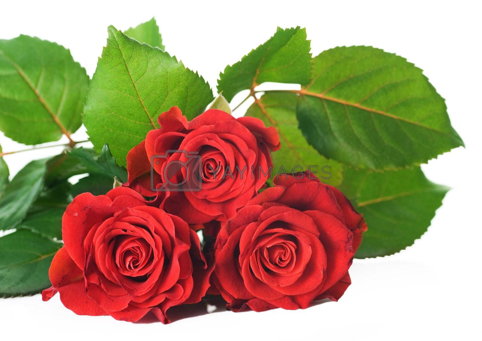 Red Roses Bunch by Subbotina Anna