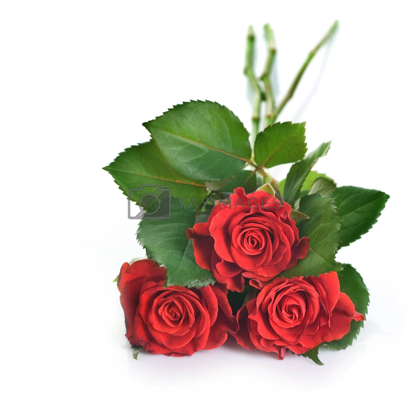 Beautiful Red Roses by Subbotina Anna