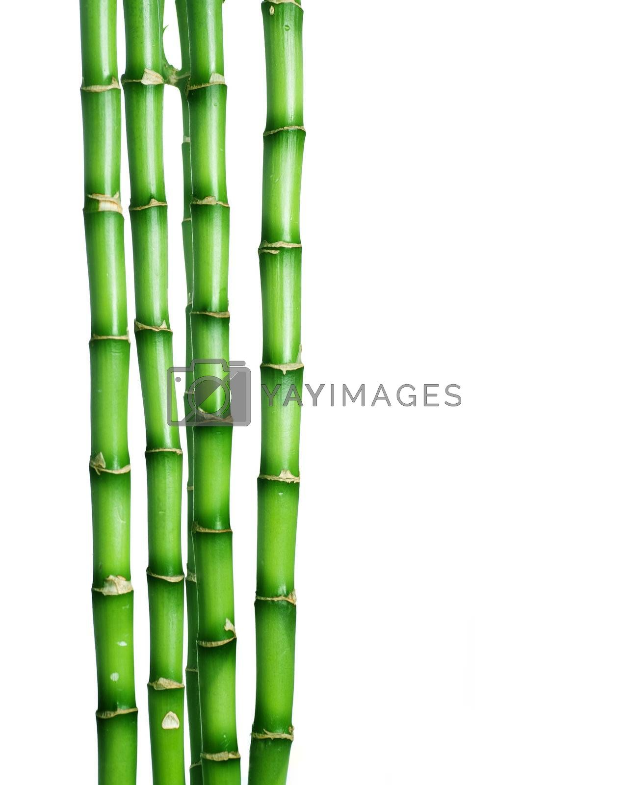Bamboo over white  by Subbotina Anna