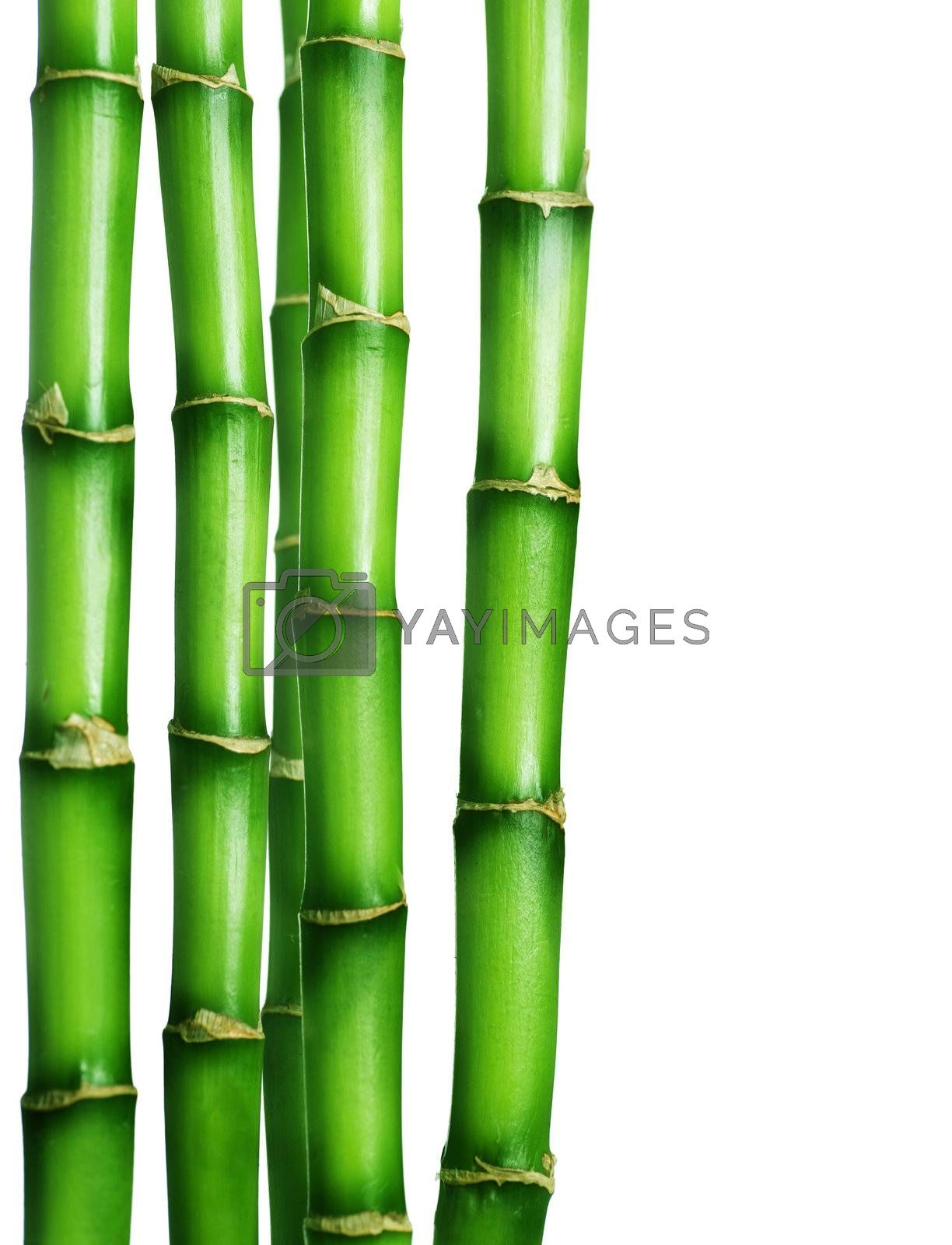Bamboo Border  by Subbotina Anna