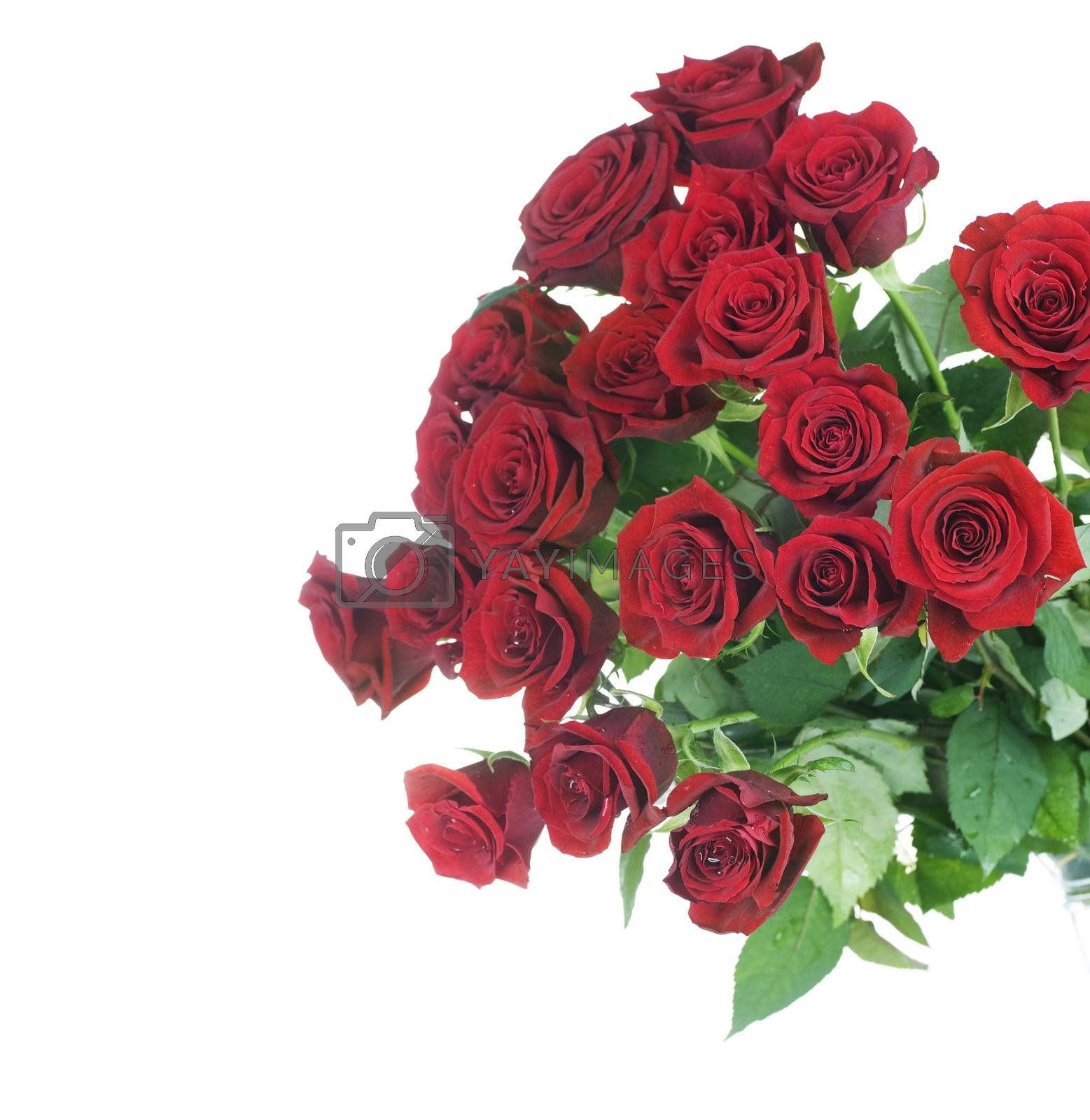 Red Roses bunch border over white by Subbotina Anna
