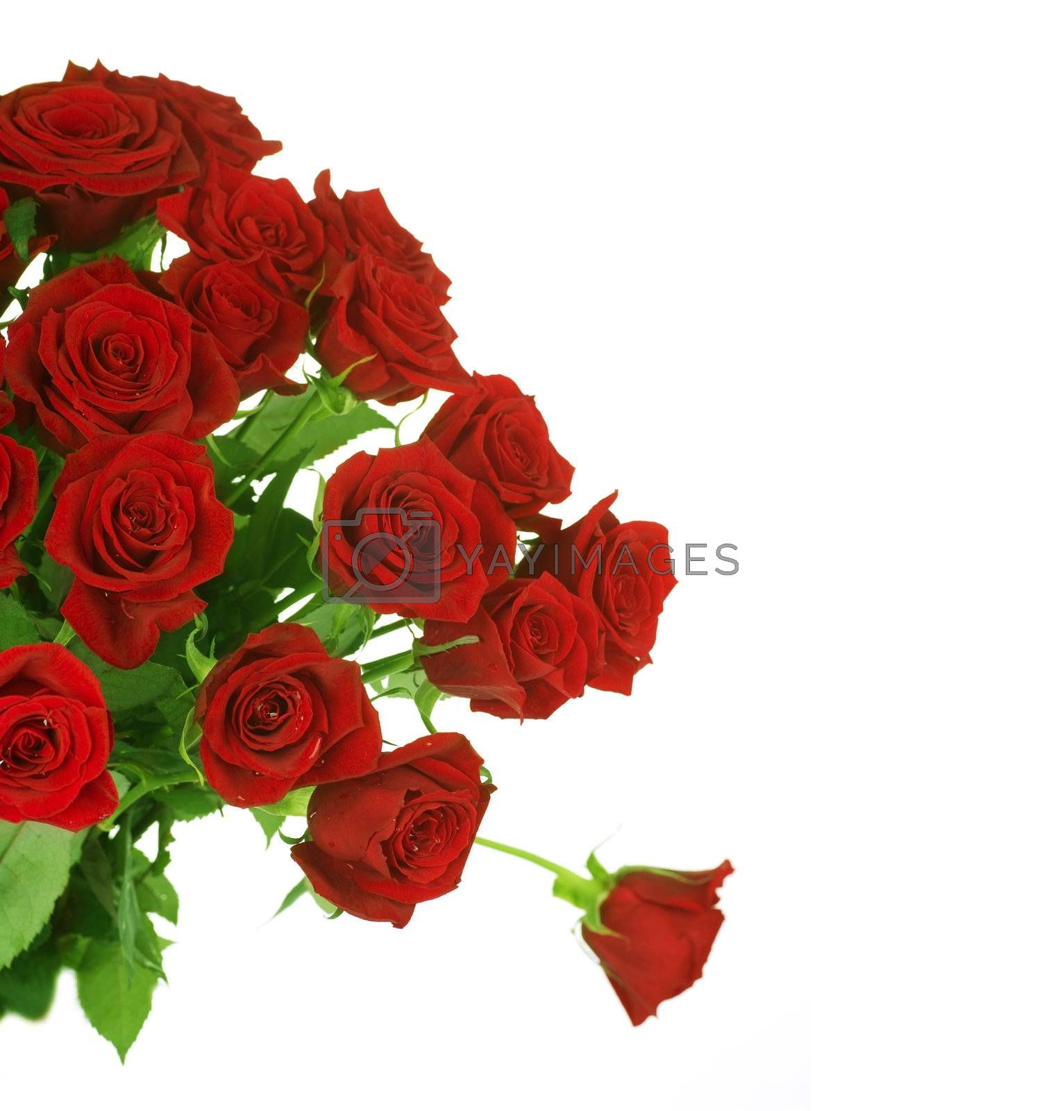 Red Roses border over white by Subbotina Anna