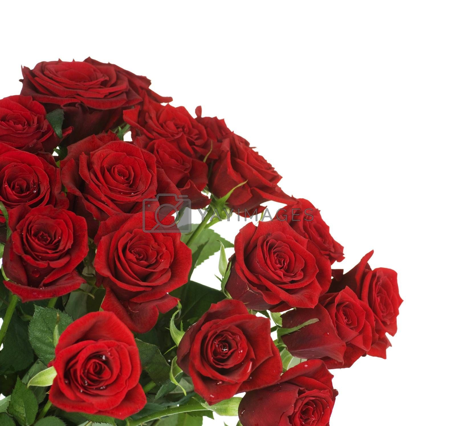 Big Red Roses Bouquet border by Subbotina Anna