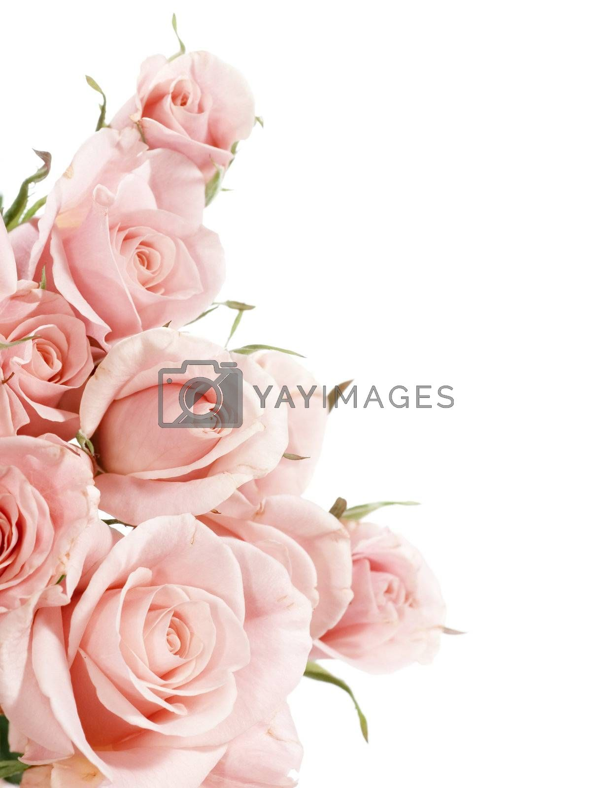 Beautiful Roses Border  by Subbotina Anna