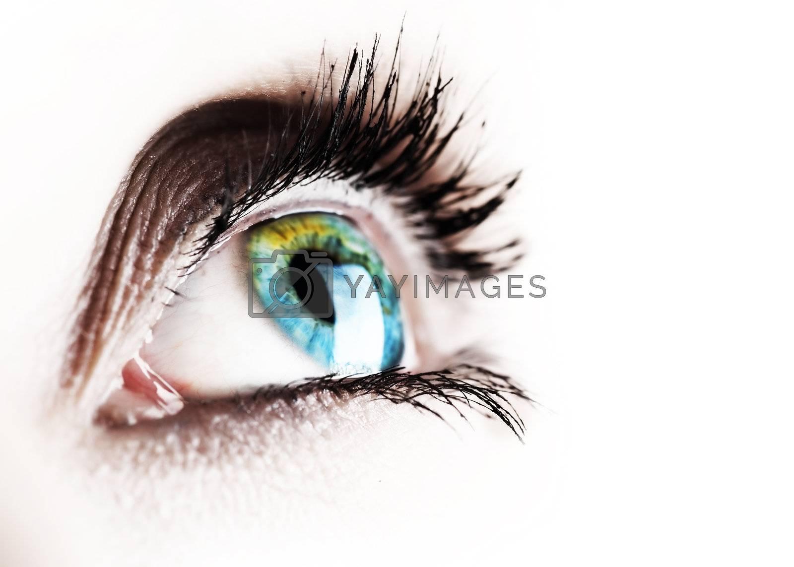 Beautiful Eye Isolated On White by Subbotina Anna