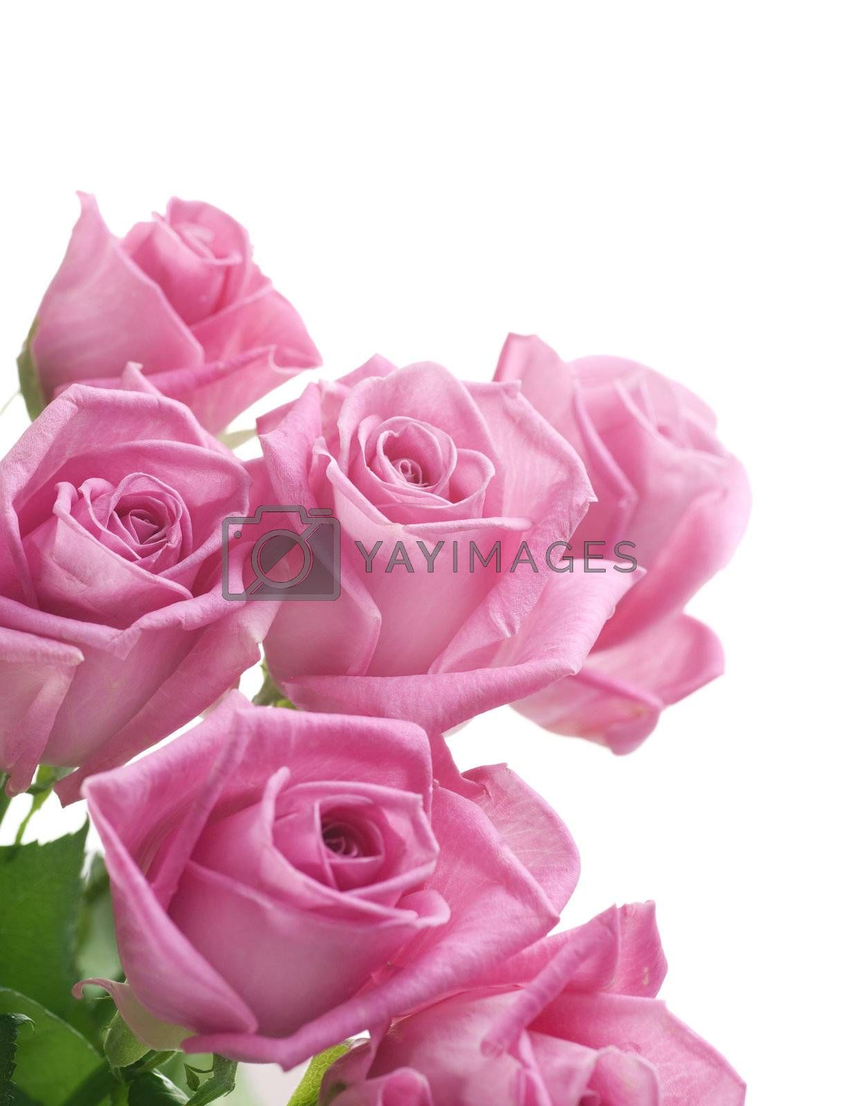 Roses border by Subbotina Anna
