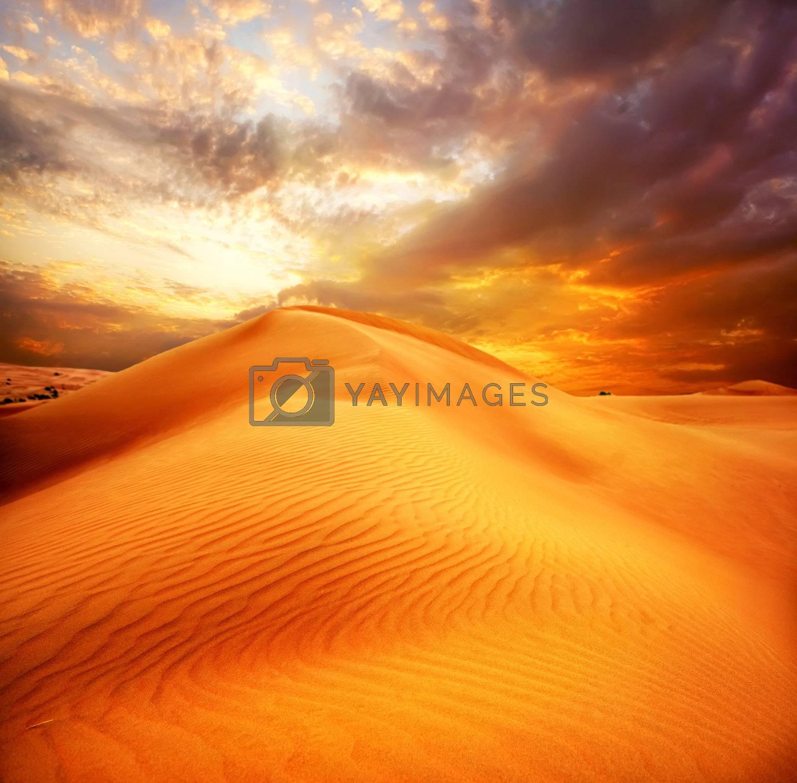 Desert by Subbotina Anna
