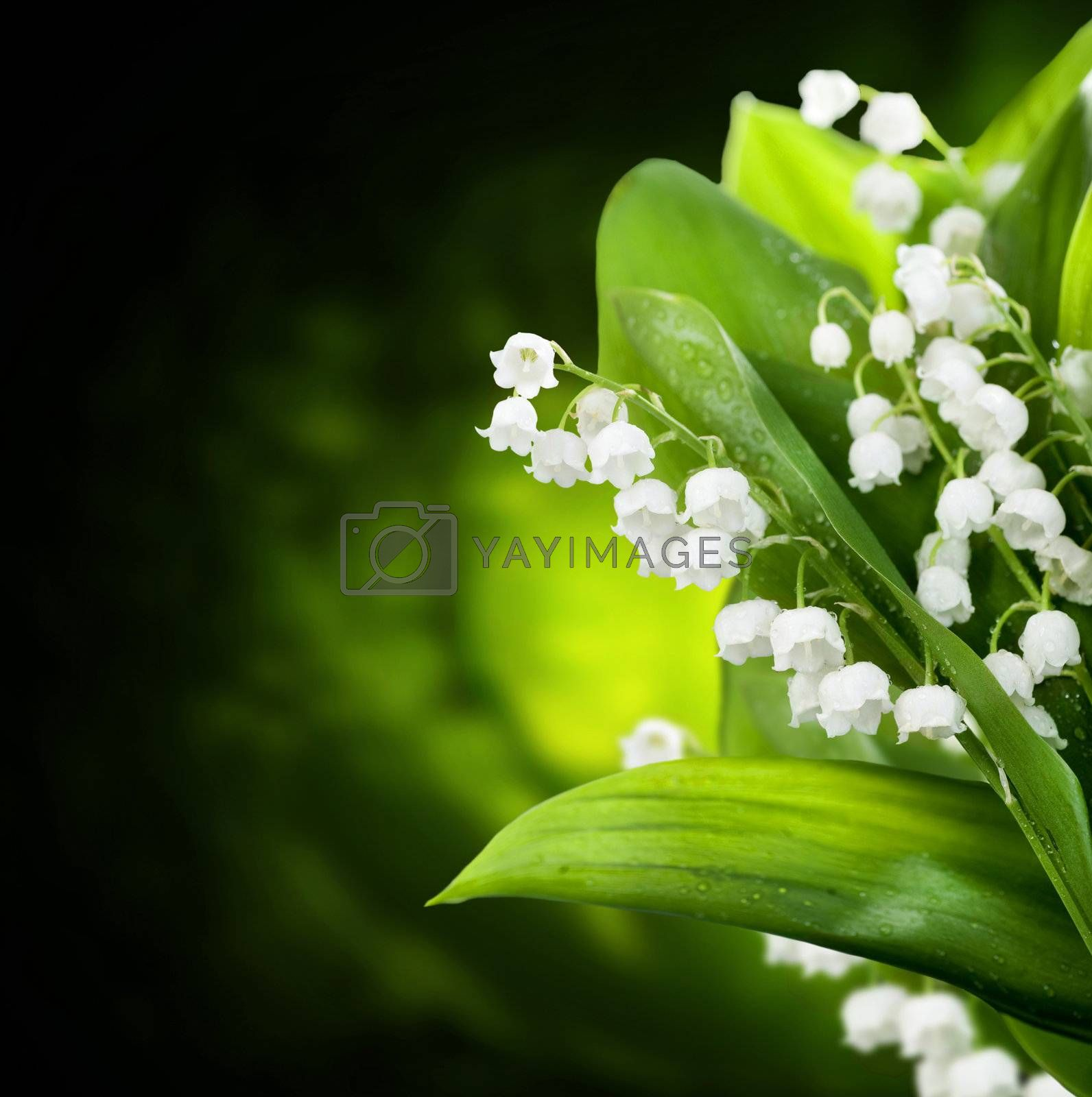 Lily-of-the-valley Flowers Design  by SubbotinaA