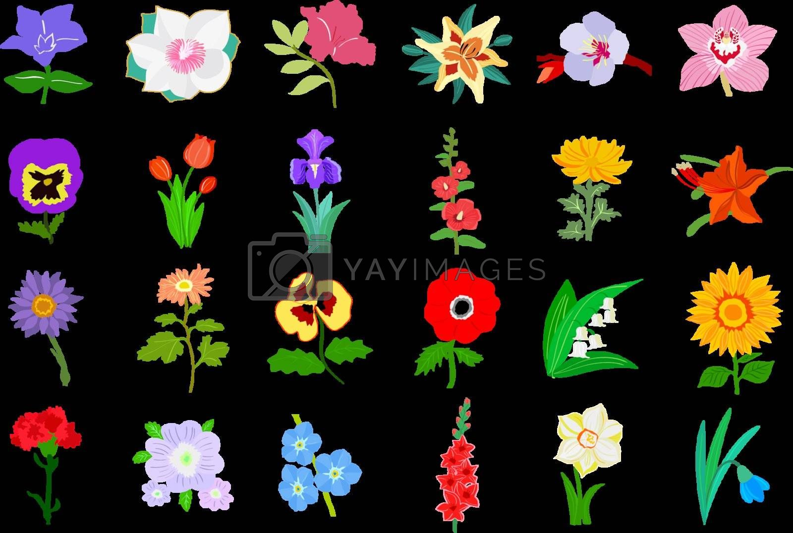 Set of colored illustration of flowers