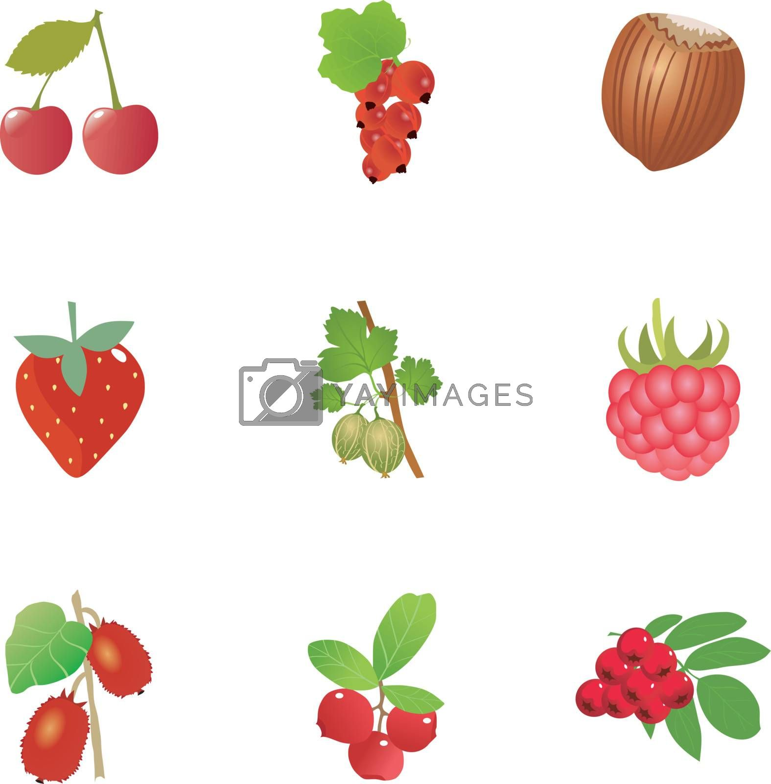 set of the beautiful fresh berries