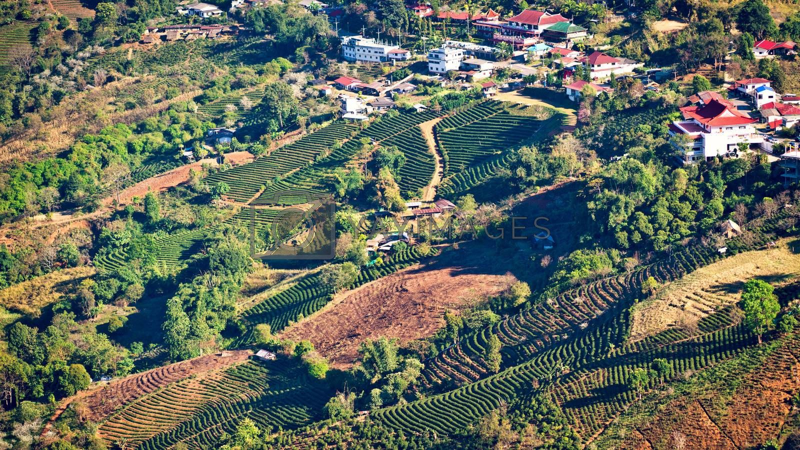 View of Mae Salong village with tea plantation, Chiang Mai province, Thailand