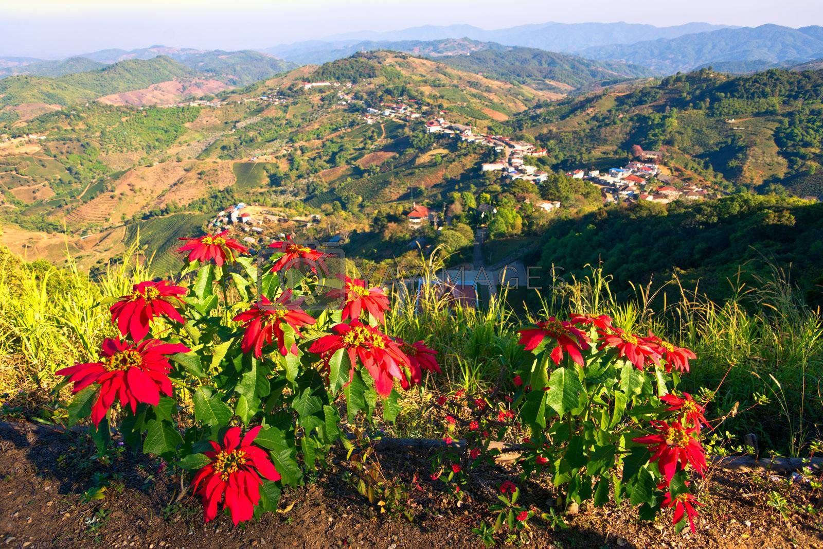 Top view of Mae Salong village in the mountains, Chiang Mai province, Thailand