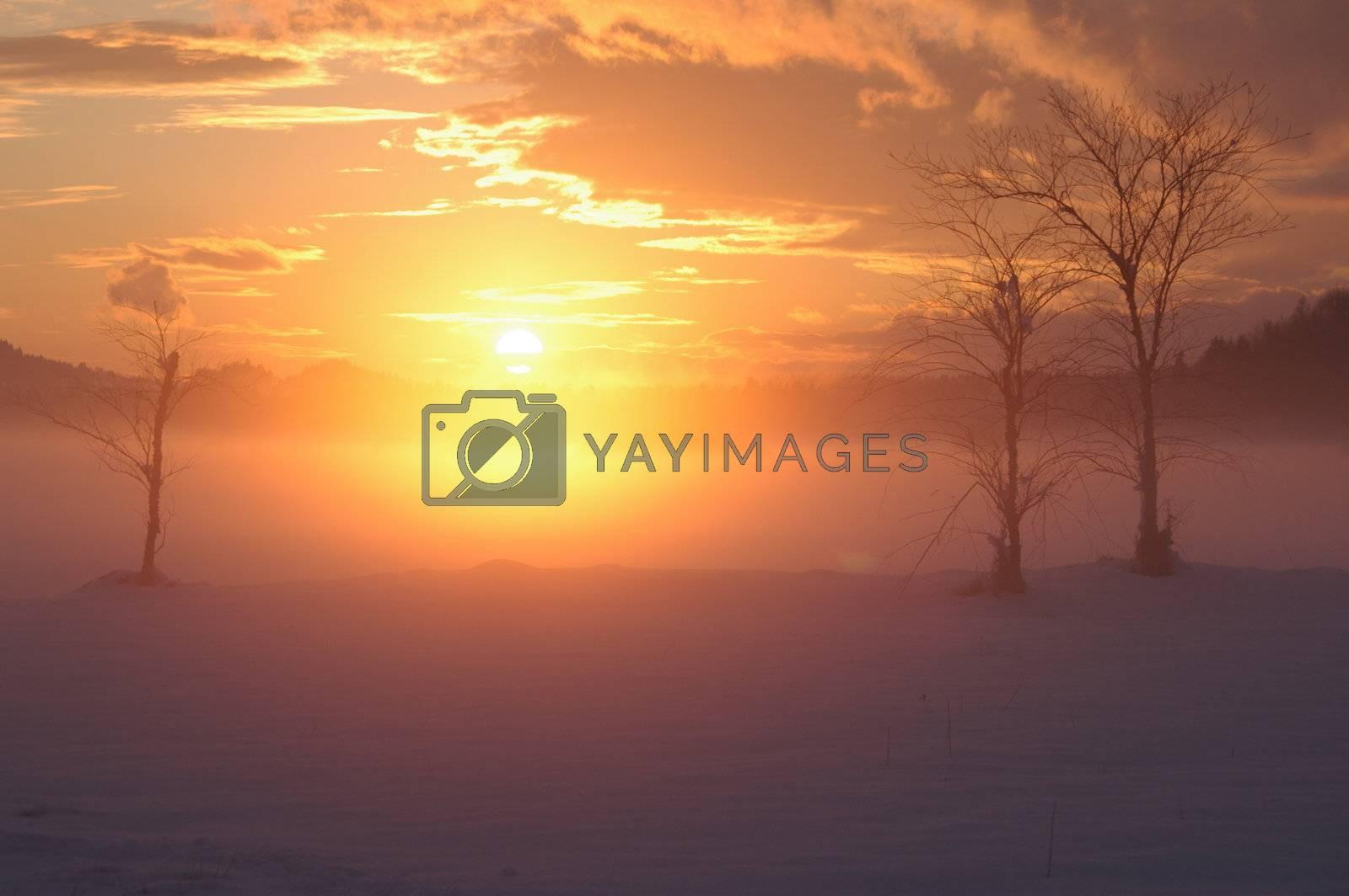 a romantic misty winter golden orange sunset