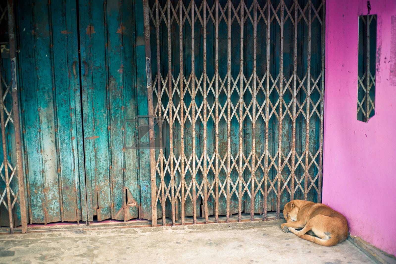 The sleeping dog is lying in the corner of a building