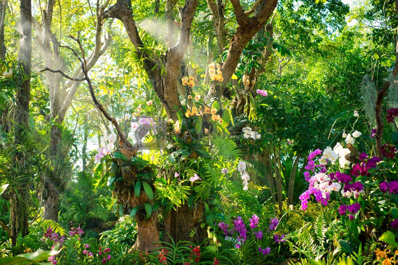 Orchid garden in tropics