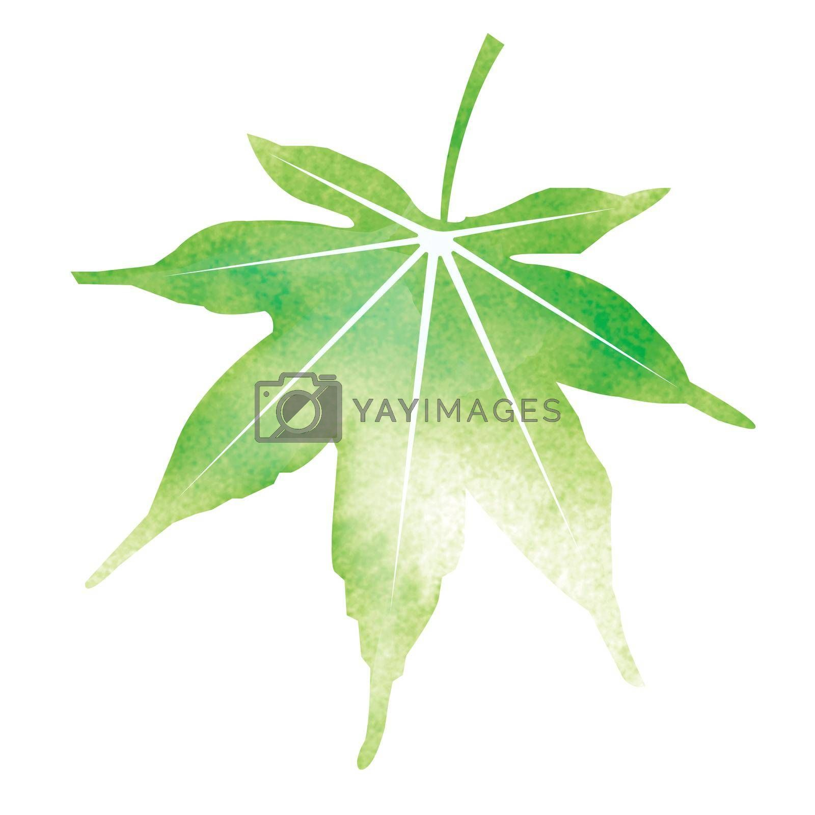 Royalty free image of Summer motif watercolor painting illustration for summer greeting card etc. | maple leaf by barks