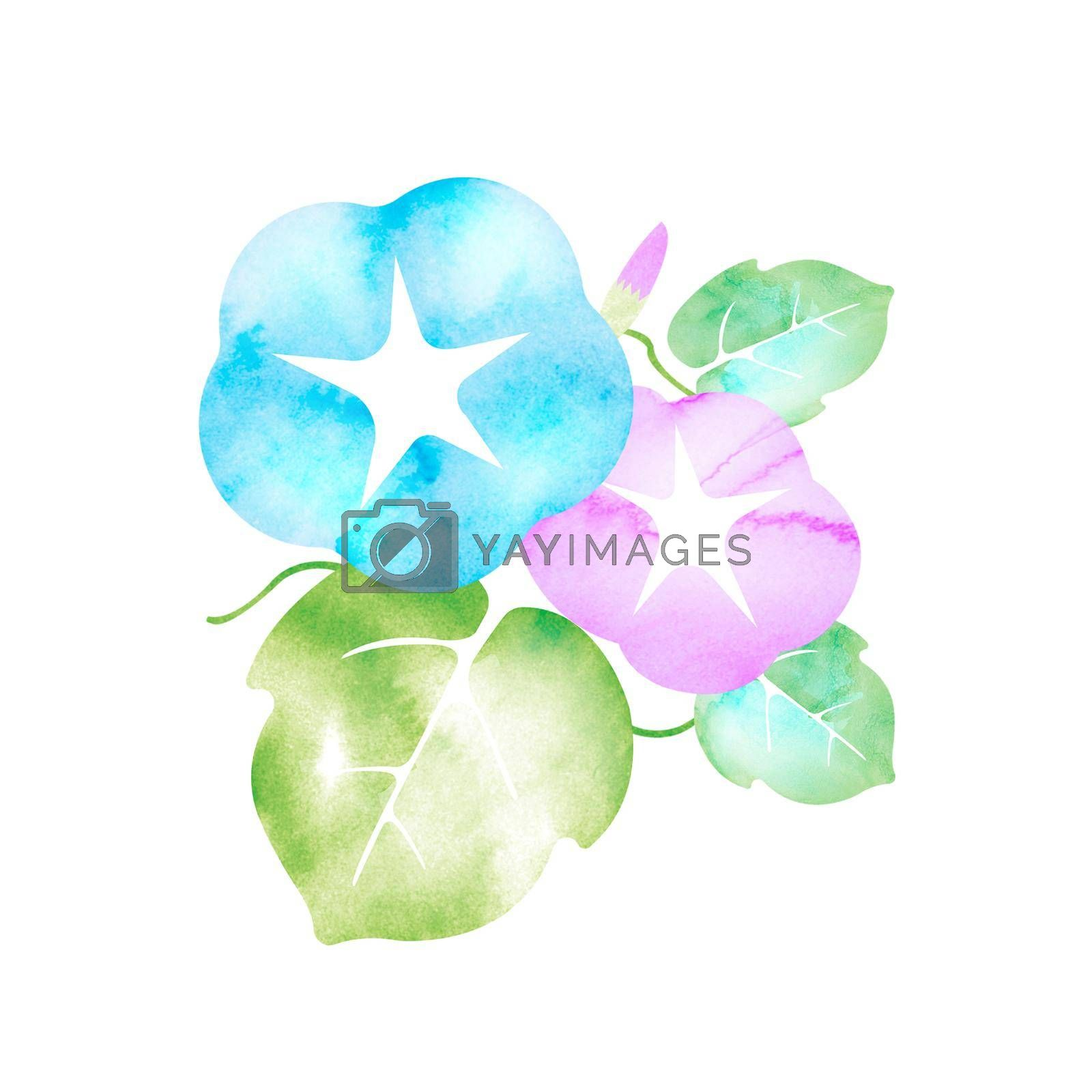 Royalty free image of Summer motif watercolor painting illustration for summer greeting card etc.   morning glory flower by barks