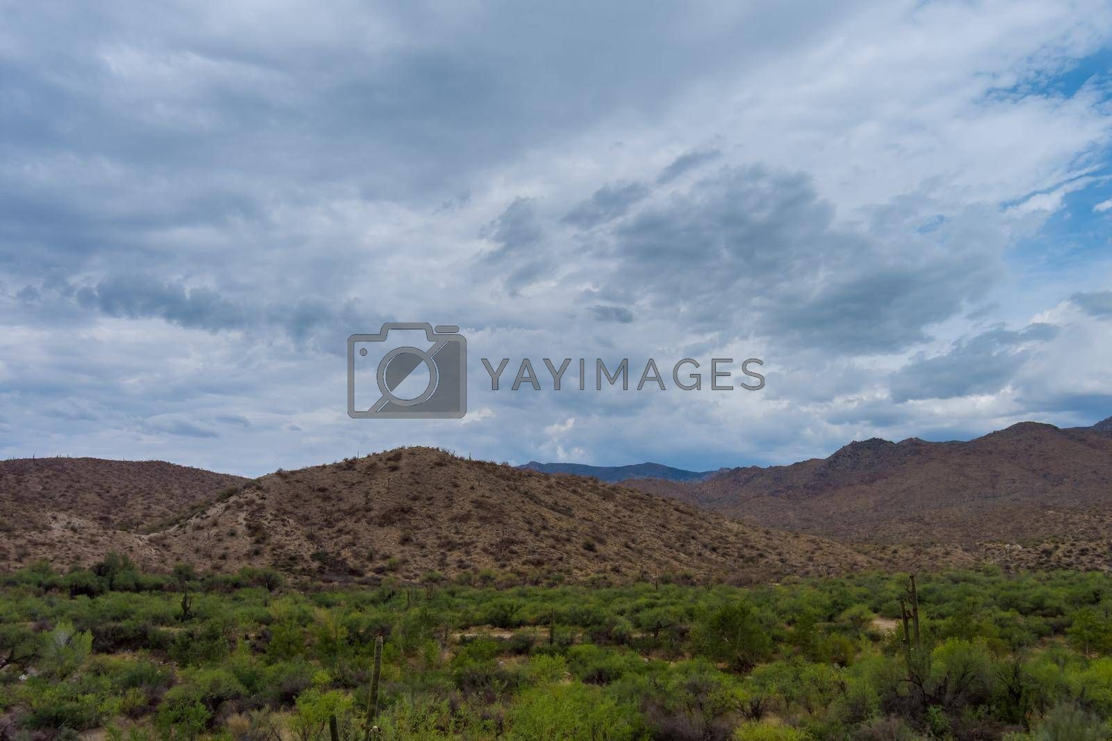 Royalty free image of Panoramic view of a road in a desert New Mexico by ungvar