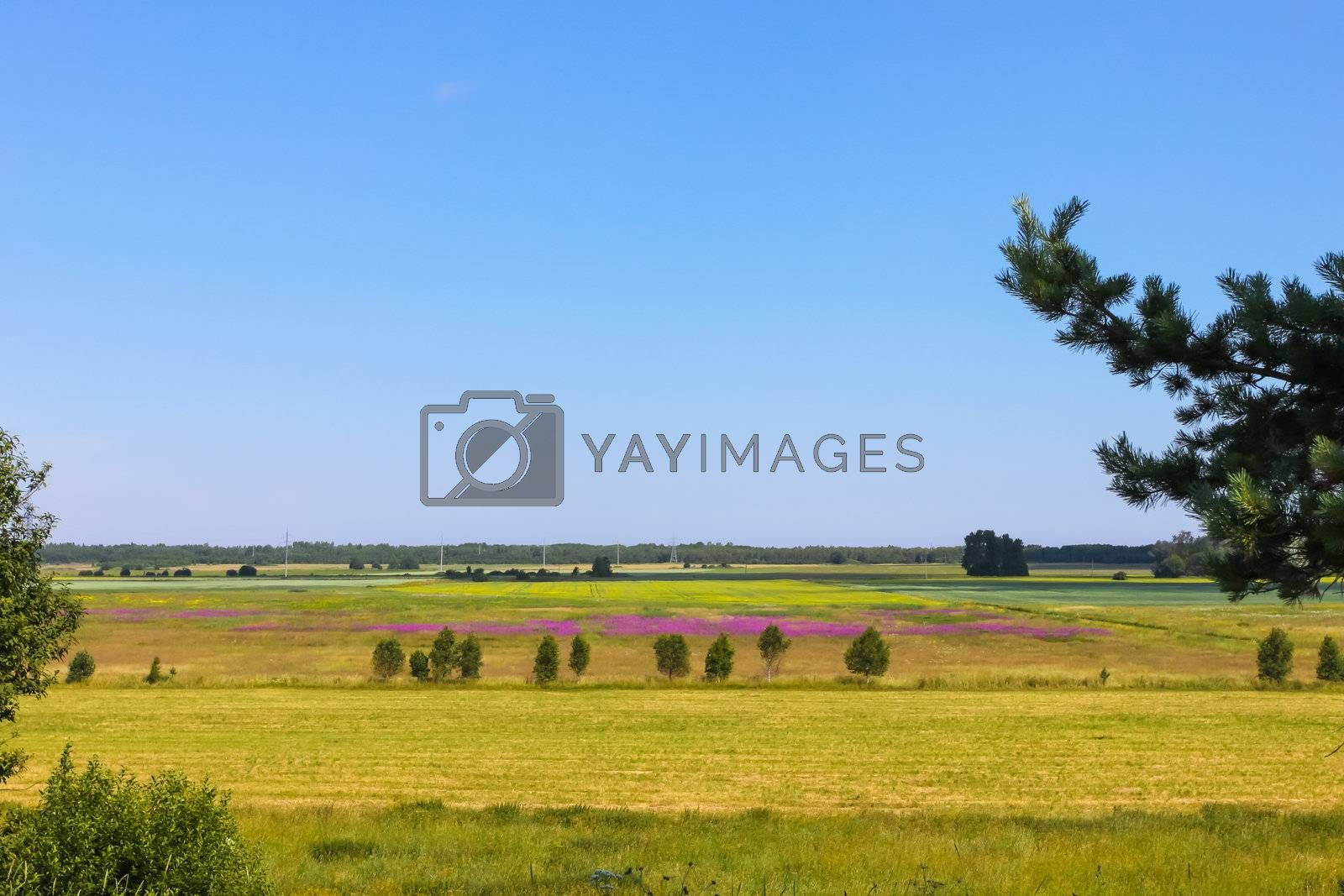 Countryside landscape with meadow, woods and blue sky