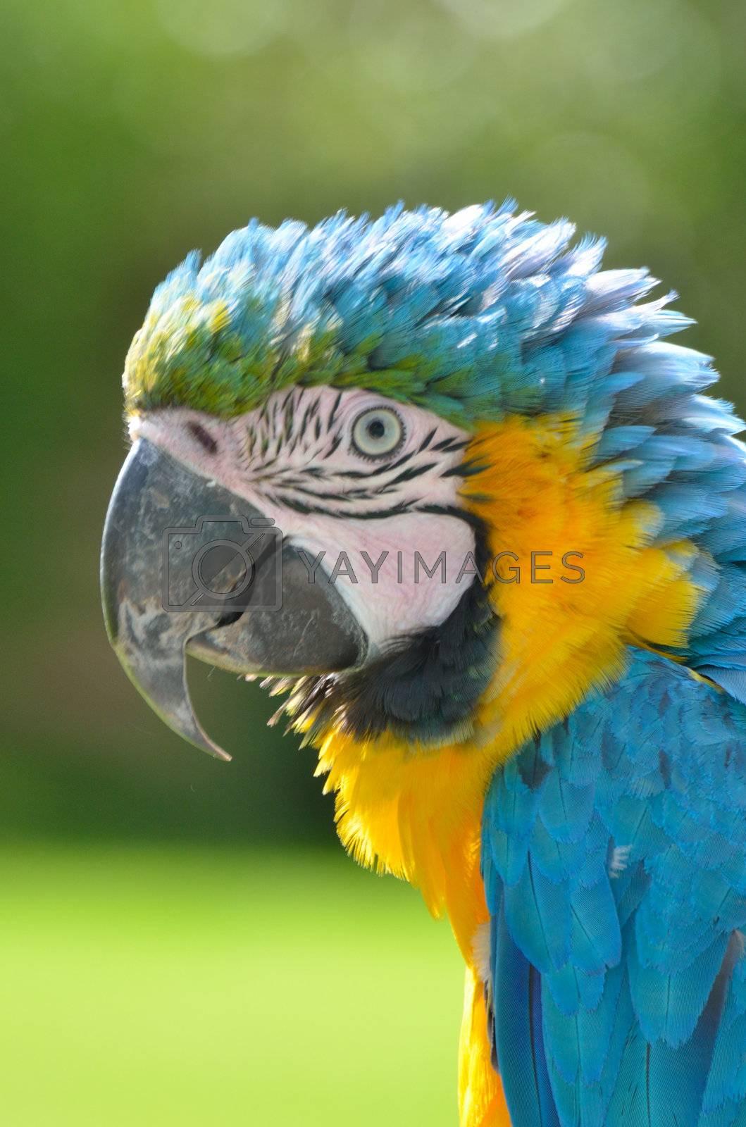 Portrait of Parrot